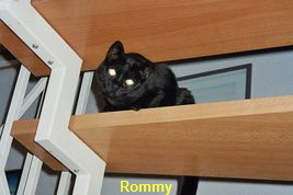 Unsere Findelkatze Rommy
